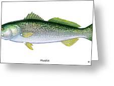Weakfish Greeting Card
