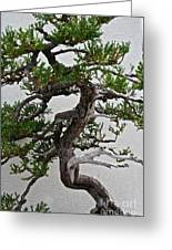 Weathered Bonsai Greeting Card