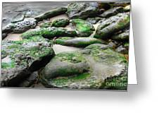 Weathered By Tides Greeting Card