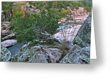 Weathered Cedar Overlooking The Castor River Greeting Card
