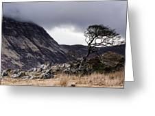 Weathered Tree Greeting Card