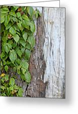 Weathered Tree Trunk With Vines Greeting Card