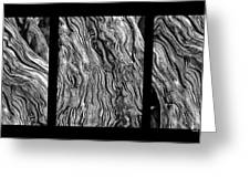 Weathered Wood Triptych Bw Greeting Card