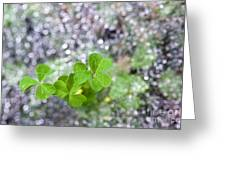 Web And Clover Greeting Card