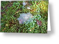 Web In Moss Greeting Card