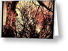 Web Of Tree Mauve Greeting Card