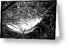web1BW Greeting Card