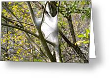 Webbed Branches Greeting Card