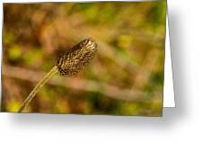 Weed Seed Head Greeting Card
