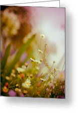 Weeded Desire - Light Greeting Card