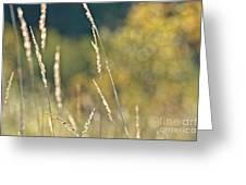 Weeds And Bokeh Greeting Card