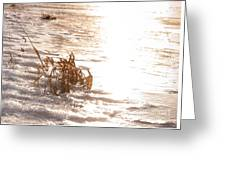 Weeds On Ice Greeting Card