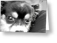 Weegee Wedgie Greeting Card