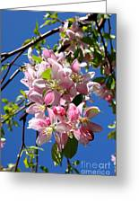 Weeping Cherry Tree Blossoms Greeting Card by Carol Groenen