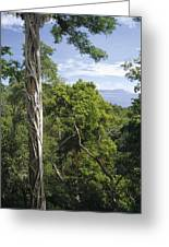 Weeping Fig And Host Natu Tree Sulawesi Greeting Card