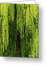 Weeping Willow Tree Enchantment  Greeting Card
