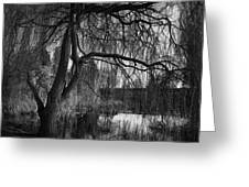 Weeping Willow Tree Greeting Card by Ian Barber
