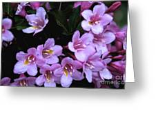 Weigela Blossoms Greeting Card