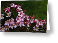 Weigela Branch Greeting Card