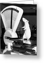 Weight Watcher Lab Rat Greeting Card