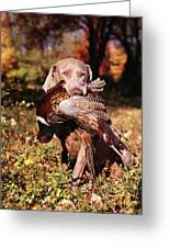 Weimaraner Hunting Dog Retrieving Ring Greeting Card