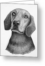 Weiner Dog Greeting Card