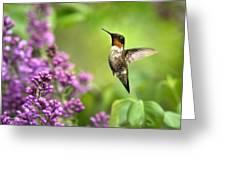 Welcome Home Hummingbird Greeting Card