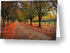 Welcome Home Bradford Pear Lined Drive-way Greeting Card