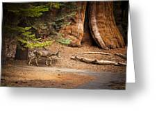 Welcome Home - Sequoia National Forest Greeting Card
