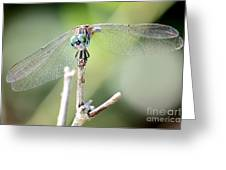 Welcome To My World Dragonfly Greeting Card