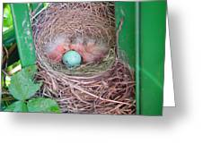 Welcome To The World - Hatching Baby Robin Greeting Card