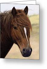 Welsh Pony Painting Greeting Card