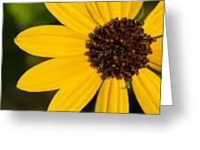 West Coast Dune Sunflower Greeting Card