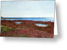 West Florida Panhandle Looking Towards The Gulf Greeting Card
