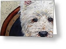 West Highland Terrier Dog Portrait Greeting Card