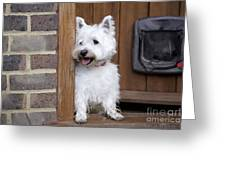 West Highland White Terrier Greeting Card