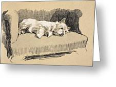 West Highlander, 1930 Greeting Card