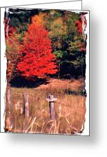 West Virginia Country Roads - Autumn Colorfest No. 1 - Germany Valley Pendleton County Wv Greeting Card