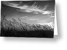 West Wind Bw Greeting Card
