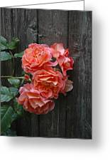 Westerland Rose Wood Fence Greeting Card