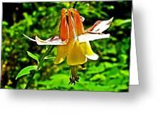 Western Columbine Along Wapta Falls Trail In Yoho National Park-british Columbia Greeting Card