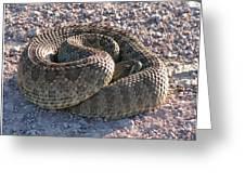 Western Dakota Prairie Rattlesnake Greeting Card