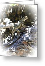 Western Fence Lizard Aka Blue-belly Lizard Greeting Card