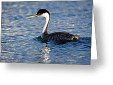 Western Grebe Greeting Card