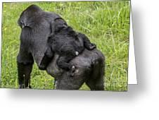 Western Lowland Gorilla 1 Greeting Card