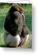 Western Lowland Gorilla Silverback Greeting Card