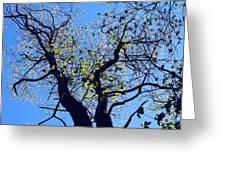 Western Michigan Trees 1 Greeting Card