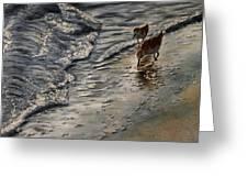 Western Sandpiper Greeting Card