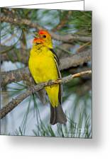 Western Tanager Singing Greeting Card