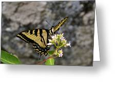 Western Tiger Swallowtail Butterfly 2 Greeting Card